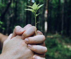 Nachhaltigkeit In Unternehmen – Teil 1